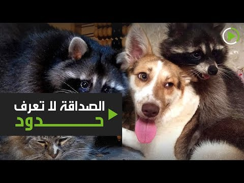 الصداقة لا تعرف حدود وعشق الحيوانات يكشفها