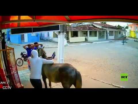 لصا نينجا يسرقان متجرًا على ظهر حصان في البرازيل