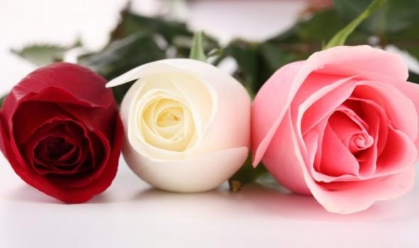 لبنان اليوم - تفسير رؤية الزهور و الورد في المنام